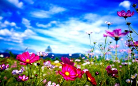 La primavera rubriche for Immagini desktop primavera
