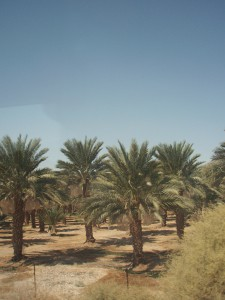 Palma-israele.jpg